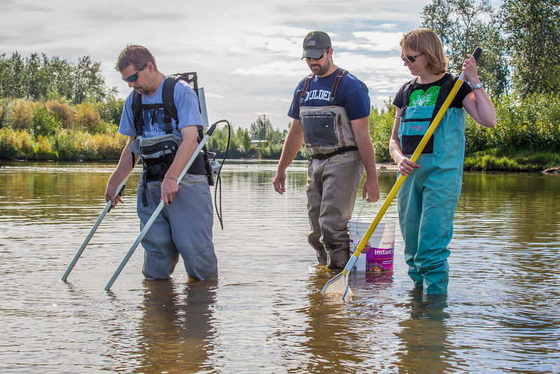 """Fisheries professor Trent Sutton, left, works with master's candidate Nick Smith and undergraduate Patty McCall collecting live samples from the Chena River for their research on the life dynamics of Arctic brook lampreys.  <div class=""""ss-paypal-button"""">Filename: AAR-12-3468-017.jpg</div><div class=""""ss-paypal-button-end"""" style=""""""""></div>"""