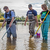 "Fisheries professor Trent Sutton, left, works with master's candidate Nick Smith and undergraduate Patty McCall collecting live samples from the Chena River for their research on the life dynamics of Arctic brook lampreys.  <div class=""ss-paypal-button"">Filename: AAR-12-3468-017.jpg</div><div class=""ss-paypal-button-end"" style=""""></div>"