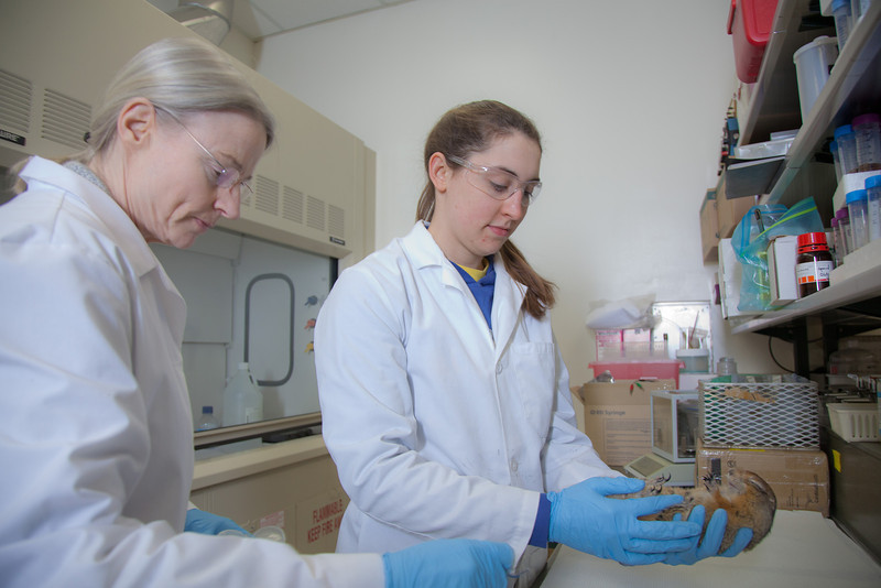 "Senior biology major Colleen Bue assists Professor Kelly Drew with her research involving hibernating ground squirrels in Drew's lab in the Irving Building.  <div class=""ss-paypal-button"">Filename: AAR-12-3309-11.jpg</div><div class=""ss-paypal-button-end"" style=""""></div>"