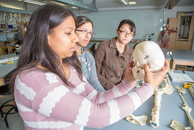 Teaching assistant Sophie Chowdhury, left, works with udergraduates Heather Bruhn and Michelle Negrete during their summer sessions anatomy and physiology lab in the Murie Building.  Filename: AAR-13-3856-97.jpg