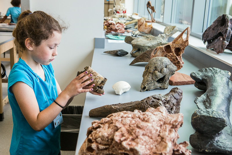 """Youngsters learn all about dinosaurs in Summer Sessions' DinoCamp at the Murrie Building.  <div class=""""ss-paypal-button"""">Filename: AAR-14-4242-73.jpg</div><div class=""""ss-paypal-button-end""""></div>"""