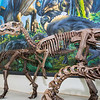 "A mounted dinosaur skeleton display of Ugrunaaluk kuukpikensis, an arctic duck-billed hadrosaur, stands near the entrance of the University of Alaska Museum of the North.  <div class=""ss-paypal-button"">Filename: AAR-16-4890-80.jpg</div><div class=""ss-paypal-button-end""></div>"