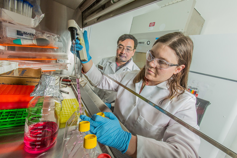 """Associate professor Jack Chen looks on as Ph.D. candidate Jayme Parker performs a virological assay in the safety cabinet inside the virology lab in the Murie Building.  <div class=""""ss-paypal-button"""">Filename: AAR-13-3989-56.jpg</div><div class=""""ss-paypal-button-end"""" style=""""""""></div>"""