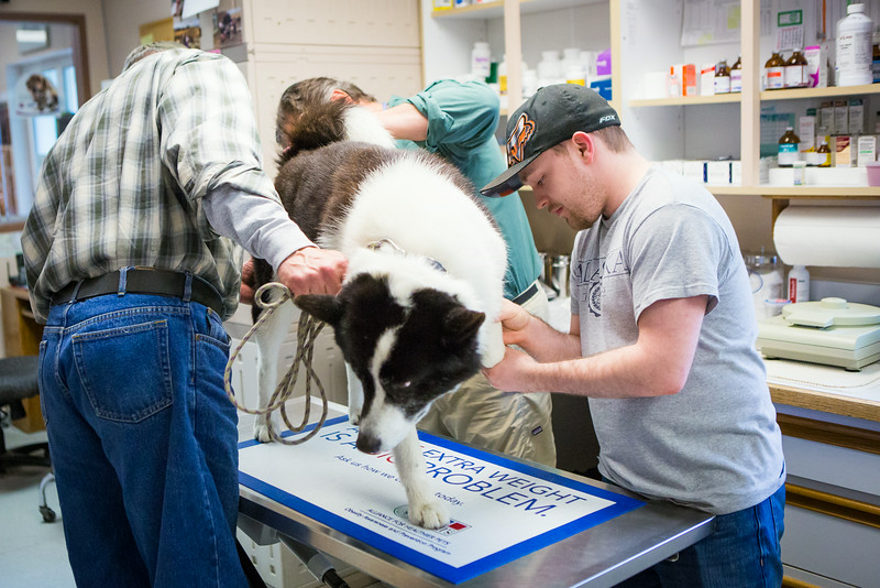 """Veterinary Medicine student, Christopher, Clement, interns with Dr. David Hunt during Summer of 2014 at the Sitka Animal Hospital in Sitka, Alaska.  <div class=""""ss-paypal-button"""">Filename: AAR-14-4206-11.jpg</div><div class=""""ss-paypal-button-end""""></div>"""
