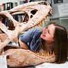 "Tamara Swenson peers inside a skull replica of a Tarbosaurus during the Life in the Age of Dinosaurs lab where they toured the Museum of the North's normally unseen lower level.  <div class=""ss-paypal-button"">Filename: AAR-14-4066-12.jpg</div><div class=""ss-paypal-button-end""></div>"