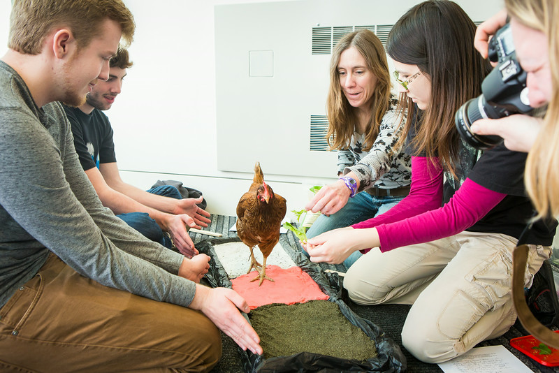 "Students from the Life in the Age of Dinosaurs class use a living avian dinosaur during a lab with Professor Sarah Fowell at the Museum of the North.  <div class=""ss-paypal-button"">Filename: AAR-14-4147-11.jpg</div><div class=""ss-paypal-button-end""></div>"
