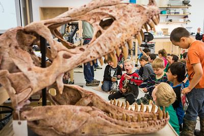 Youngsters learn all about dinosaurs in Summer Sessions' DinoCamp at the Murrie Building.  Filename: AAR-14-4242-91.jpg