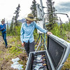 "Associate professor Margaret Darrow, inspects batteries which power a weather station installed on one of  several frozen debris lobes which have appeared along the Dietrich River valley in the southern Brooks Range. Darrow, along with state geologists Ronald Daanen, left, and Trent Hubbard, are trying to figure out how to slow down or stop the movement of the lobes which threaten the Dalton Highway and the nearby trans-Alaska pipeline.  <div class=""ss-paypal-button"">Filename: AAR-14-4214-480.jpg</div><div class=""ss-paypal-button-end""></div>"