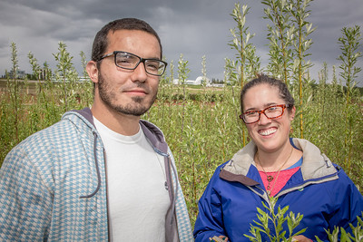 Henrique Goncalves, left, and Desneige Hallbert collect data on a group of willows in a plot under cultivation on UAF's experiment farm. Interns with the Alaska Center for Energy and Power, the two are helping to monitor the growth of native plant species for their potential use as biomass fuels.  Filename: AAR-13-3853-77.jpg