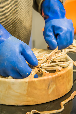 Community members take a class on treating and making products with local reindeer hides at UAF's Northwest Campus in Nome.  Filename: AAR-16-4865-456.jpg