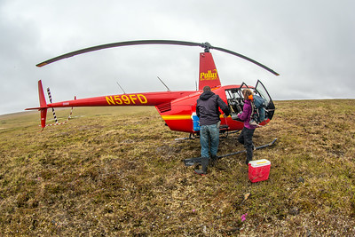 Ph.D candidate Ludda Ludwig, right, helps unload a helicopter after a short flight from the Toolik Field Station to her research site near the headwaters of the Kuparuk River. Ludwig's study is focused on the movement of water and nutrients from Arctic hillslopes to streams. The Toolik research facility, located about 370 miles north of Fairbanks on Alaska's North Slope, is operated by UAF's Institute of Arctic Biology.  Filename: AAR-14-4217-026.jpg