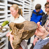 "Collection Specialist Julie Rousseau leads a group of students for a tour of the Museum of the North's lower level during the Life in the Age of Dinosaurs lab.  <div class=""ss-paypal-button"">Filename: AAR-14-4066-67.jpg</div><div class=""ss-paypal-button-end""></div>"