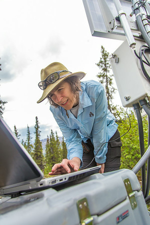 Associate professor Margaret Darrow, reads data from a weather station installed on one of  several frozen debris lobes which have appeared along the Dietrich River valley in the southern Brooks Range. Darrow, along with state geologists Ron Daanen, and Trent Hubbard, are trying to figure out how to slow down or stop the movement of the lobes which threaten the Dalton Highway and the nearby trans-Alaska pipeline.  Filename: AAR-14-4214-515.jpg
