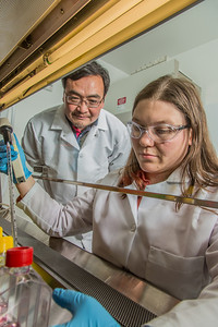 Associate professor Jack Chen looks on as Ph.D. candidate Jayme Parker performs a virological assay in the safety cabinet inside the virology lab in the Murie Building.  Filename: AAR-13-3989-42.jpg
