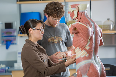 Michelle Negrete and Walter Hafner complete a procedure during their summer sessions anatomy and physiology lab in the Murie Building.  Filename: AAR-13-3856-63.jpg