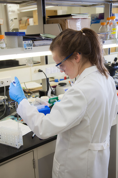 "Julia Covell works with tissue samples of fish from Antarctica in Associate Professor Kristin O'Brien's lab in the Arctic Health Research Building.  <div class=""ss-paypal-button"">Filename: AAR-12-3365-069.jpg</div><div class=""ss-paypal-button-end"" style=""""></div>"