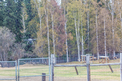 An Aeryon Scout quadcopter, featuring a top speed of 30 mph and maximum flight time of 20 minutes, will be used to conduct a series of aerial flights this summer supporting wildlife research activities at UAF's Large Animal Research Station.  Filename: AAR-14-4172-115.jpg