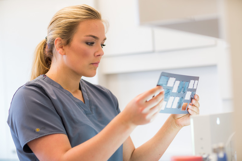 """CTC dental assisting student Lauren Slater inspects a set of radiograph x-rays at CTC's facility on Barnette Street in downtown Fairbanks.  <div class=""""ss-paypal-button"""">Filename: AAR-16-4873-086.jpg</div><div class=""""ss-paypal-button-end""""></div>"""