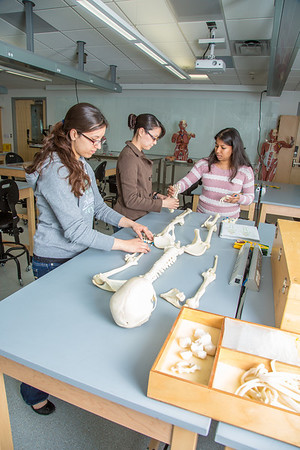 Undergraduates Heather Bruhn, left, and Michelle Negrete work with teaching assistant Sophie Chowdhury during their summer sessions anatomy and physiology lab in the Murie Building.  Filename: AAR-13-3856-83.jpg