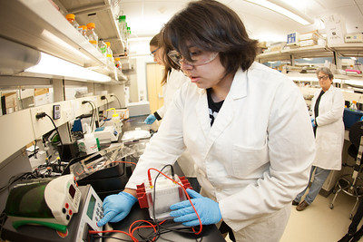 Isabell Raymundo of Chicago works in the lab at the Arctic Health and Research Building.  Filename: AAR-12-3457-30.jpg