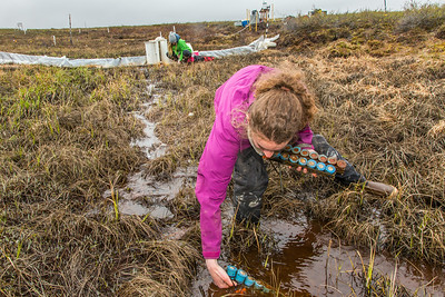 Ludda Ludwig, a Ph.D. candidate with UAF's College of Natural Science and Mathematics, collects water samples from a research site near the headwaters of the Kuparuk River on Alaska's North Slope.  Filename: AAR-14-4217-059.jpg