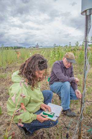 Amanda Byrd, a research technician with the Alaska Center for Energy and Power, works with Steven Sparrow, dean of UAF's College of Natural Resources and Agricultural Sciences, to collect data on a plot of willows being grown on the experiment farm to study their potential use as a source of biofuel. A group ACEP summer interns look on.  Filename: AAR-13-3853-15.jpg