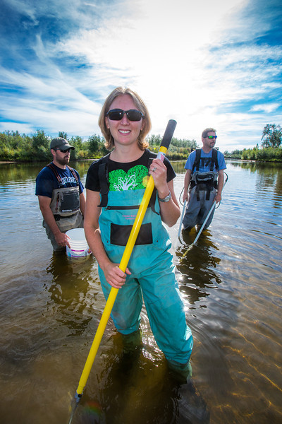 """Undergraduate Patty McCall works with Fisheries Professor Trent Sutton, right, and master's candidate Nick Smith collecting live samples from the Chena River for their research on the life dynamics of Arctic brook lampreys.  <div class=""""ss-paypal-button"""">Filename: AAR-12-3468-063.jpg</div><div class=""""ss-paypal-button-end""""></div>"""