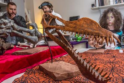 Staff members display dinosaur bones to visitors during the University of Alaska Museum of the North's annual Halloween open house.  Filename: AAR-14-4369-16.jpg
