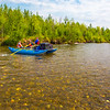 "Personnel with the U.S. Fish and Wildlife Service and the Alaska Center for Unmanned Aircraft Systems Integration (ACUASI) raft down a stretch of the upper Chena River in an effort to collect aerial video of the popular stretch of important king salmon spawning habitat.  <div class=""ss-paypal-button"">Filename: AAR-15-4593-035.jpg</div><div class=""ss-paypal-button-end""></div>"