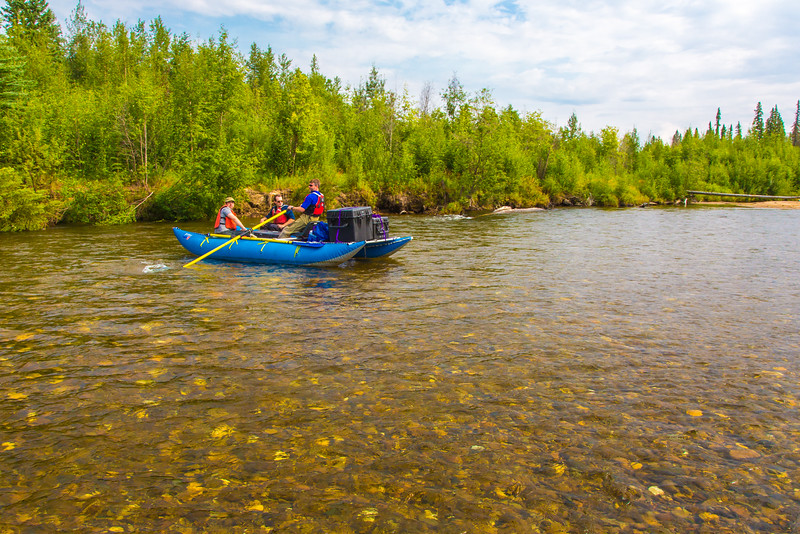 """Personnel with the U.S. Fish and Wildlife Service and the Alaska Center for Unmanned Aircraft Systems Integration (ACUASI) raft down a stretch of the upper Chena River in an effort to collect aerial video of the popular stretch of important king salmon spawning habitat.  <div class=""""ss-paypal-button"""">Filename: AAR-15-4593-035.jpg</div><div class=""""ss-paypal-button-end""""></div>"""