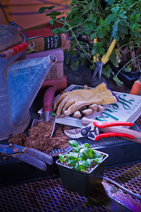 Various gardening tools and books are used as props for a photo about growing herbs in Interior Alaska gardens.  Filename: AAR-12-3256-52.jpg