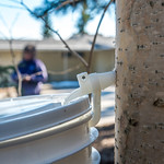 Members of OneTree Alaska collect birch sap from a tree behind the chancellor's residence on the UAF campus. OneTree Alaska is an education and outreach program of the University of Alaska F ...