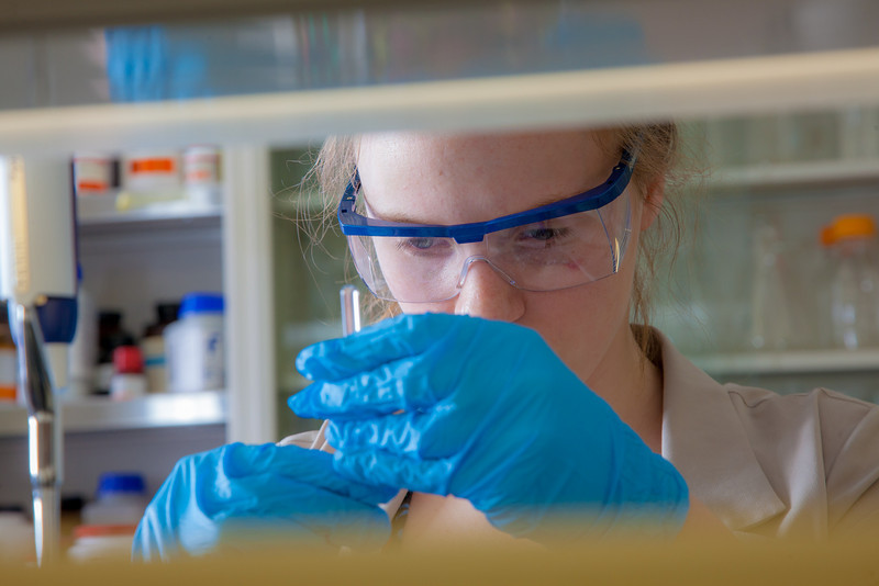 """Julia Covell works with tissue samples of fish from Antarctica in Associate Professor Kristin O'Brien's lab in the Arctic Health Research Building.  <div class=""""ss-paypal-button"""">Filename: AAR-12-3365-017.jpg</div><div class=""""ss-paypal-button-end"""" style=""""""""></div>"""