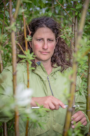 Amanda Byrd, a research technician with the Alaska Center for Energy and Power, collects data on a plot of willows being grown on the experiment farm to study their potential use as a source of biofuel.  Filename: AAR-13-3853-99.jpg