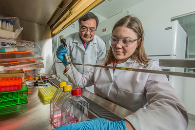 Associate professor Jack Chen looks on as Ph.D. candidate Jayme Parker performs a virological assay in the safety cabinet inside the virology lab in the Murie Building.  Filename: AAR-13-3989-45.jpg
