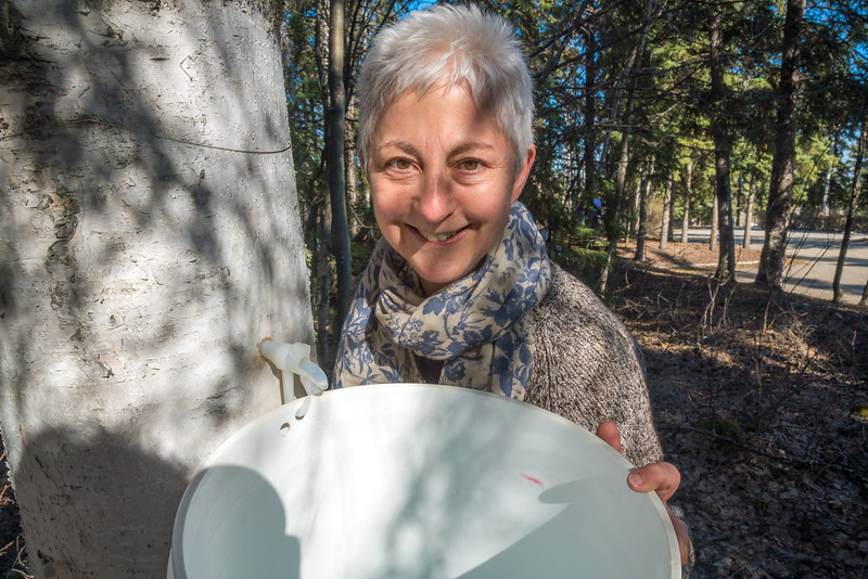 """Jan Dawe, an instructor with OneTree Alaska, collects birch sap from a tree behind the chancellor's residence on the UAF campus. OneTree Alaska is an education and outreach program of the University of Alaska Fairbanks School of Natural Resources and Extension.  <div class=""""ss-paypal-button"""">Filename: AAR-16-4874-013.jpg</div><div class=""""ss-paypal-button-end""""></div>"""