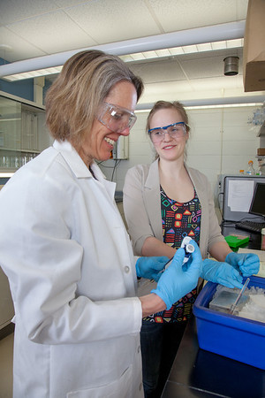"""Julia Covell works with Associate Professor Kristin O'Brien's studying tissue samples of fish from Antarctica in a lab in the Arctic Health Research Building.  <div class=""""ss-paypal-button"""">Filename: AAR-12-3365-030.jpg</div><div class=""""ss-paypal-button-end"""" style=""""""""></div>"""