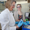 "Julia Covell works with Associate Professor Kristin O'Brien's studying tissue samples of fish from Antarctica in a lab in the Arctic Health Research Building.  <div class=""ss-paypal-button"">Filename: AAR-12-3365-030.jpg</div><div class=""ss-paypal-button-end"" style=""""></div>"