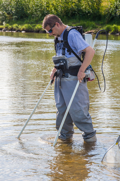"Fisheries professor Trent Sutton wades through a shallow section of the Chena River with a stunning device used to collect samples for a  research project on the life dynamics of Arctic brook lampreys.  <div class=""ss-paypal-button"">Filename: AAR-12-3468-009.jpg</div><div class=""ss-paypal-button-end"" style=""""></div>"