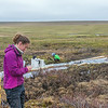 "Ludda Ludwig, a Ph.D. candidate with UAF's College of Natural Science and Mathematics, collects water samples from a research site near the headwaters of the Kuparuk River on Alaska's North Slope.  <div class=""ss-paypal-button"">Filename: AAR-14-4217-090.jpg</div><div class=""ss-paypal-button-end""></div>"