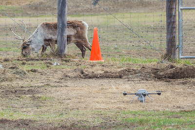An Aeryon Scout quadcopter, standing just eight inches tall, is positioned outside a fence where it will be used to conduct a series of aerial flights this summer supporting wildlife research activities at UAF's Large Animal Research Station.  Filename: AAR-14-4172-33.jpg