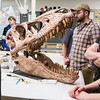 "Students are given a tour of the Museum of hte North's lower levels during the Life in the Age of Dinosaurs lab where they toured the Museum of the North's normally unseen lower level.  <div class=""ss-paypal-button"">Filename: AAR-14-4066-27.jpg</div><div class=""ss-paypal-button-end""></div>"