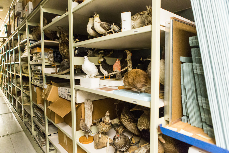 """Visitors were offered a sneak peak at the normally unseen rooms and artifacts during a behind the scenes tour of the UA Museum of the North's basement.  <div class=""""ss-paypal-button"""">Filename: AAR-13-3905-47.jpg</div><div class=""""ss-paypal-button-end"""" style=""""""""></div>"""