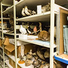 "Visitors were offered a sneak peak at the normally unseen rooms and artifacts during a behind the scenes tour of the UA Museum of the North's basement.  <div class=""ss-paypal-button"">Filename: AAR-13-3905-47.jpg</div><div class=""ss-paypal-button-end"" style=""""></div>"