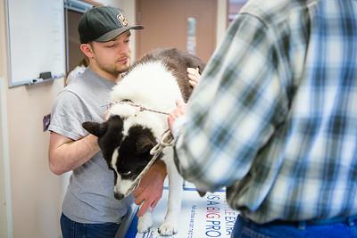 Veterinary Medicine student, Christopher, Clement, interns with Dr. David Hunt during Summer of 2014 at the Sitka Animal Hospital in Sitka, Alaska.  Filename: AAR-14-4206-15.jpg