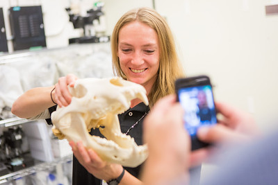 Morgan Simpson exhibits a bear skull during a behind the scenes tour of the UA Museum of the North's normally unseen rooms and artifacts underground.  Filename: AAR-13-3905-89.jpg