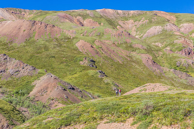 Research assistant professor Jeff Benowitz, left, and Paul Layer, dean of UAF's College of Natural Sciences and Mathematics, pause on a hike look for footprints of dinosaurs which roamed the area near the headwaters of Tattler Creek about 70 million years ago. The area of present-day Denali National Park has drawn intense interest in recent years after several discoveries of dinosaur remains.  Filename: AAR-13-3899-61.jpg