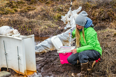 Kelsey Blake, a graduate student from the University of Victoria in British Columbia, collects water samples from a research site near the headwaters of the Kuparuk River on Alaska's North Slope.  Filename: AAR-14-4217-050.jpg