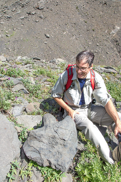 "Paul Layer, dean of UAF's College of Natural Sciences and Mathematics, inspects the fossilized footprint of a hadrosaur which roamed the area near the present day headwaters of Tattler Creek in Denali National Park. The discovery of several dinosaur remains in the area in recent years has drawn particular interest to the drainage.  <div class=""ss-paypal-button"">Filename: AAR-13-3899-123.jpg</div><div class=""ss-paypal-button-end"" style=""""></div>"