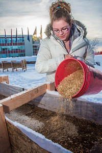 Civil engineering major Katrina Monta pours sawdust to mix with water that when frozen, hardens into a substance many times stronger than concrete. Katrina and others are hard at work on this year's ice arch, scheduled for completion Feb. 20.  Filename: AAR-13-3718-19.jpg